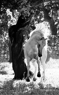 Stallion Dances Print by Carol Walker