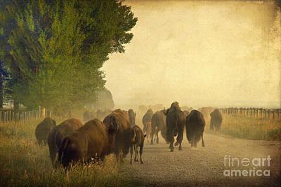 Bison Photograph - Stampede by Teresa Zieba