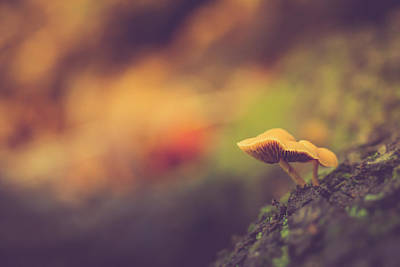 Mushroom Photograph - Standing At The Edge by Shane Holsclaw