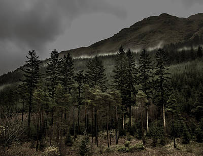 Landscape Photograph - Standing Tall by Kate Morton