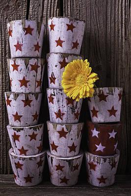 Gerbera Daisy Photograph - Star Planter Cups by Garry Gay