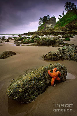 Starfish On The Rocks Print by Inge Johnsson
