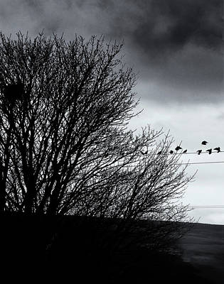 Starlings Photograph - Starlings Roost by Philip Openshaw