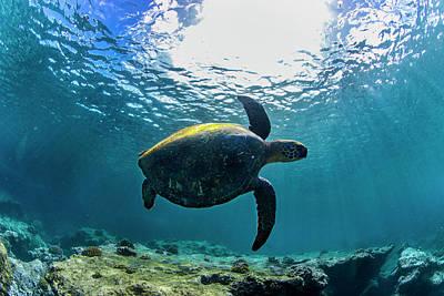 Hawaii Sea Turtle Photograph - Stealth Turtle by Sean Davey