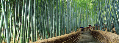 Bamboo Forest Photograph - Stepped Walkway Passing by Panoramic Images