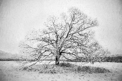 Still Alone Print by David Letts