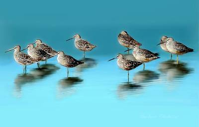 Dowitcher Photograph - Still Awareness by Barbara Chichester