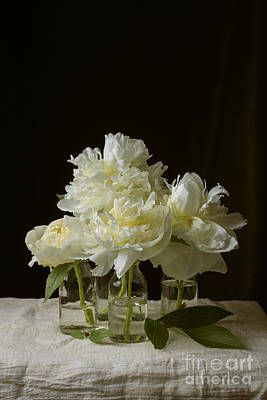 Still Life Of Peony Flowers On Table Print by Edward Fielding