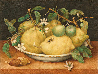Giovanna Garzoni Painting - Still Life With Bowl Of Citrons by Giovanna Garzoni