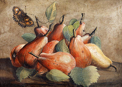 Giovanna Garzoni Painting - Still Life With Pears And A Butterfly by Giovanna Garzoni