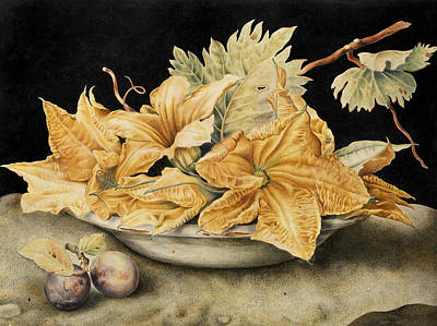 Giovanna Garzoni Drawing - Still Life With Pumpkin Flowers And Vine Leaves by Giovanna Garzoni