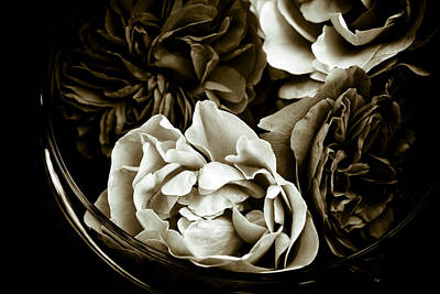 Still Life With Roses Print by Frank Tschakert