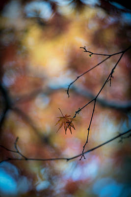 Colorful Photograph - Still Together by Mike Reid