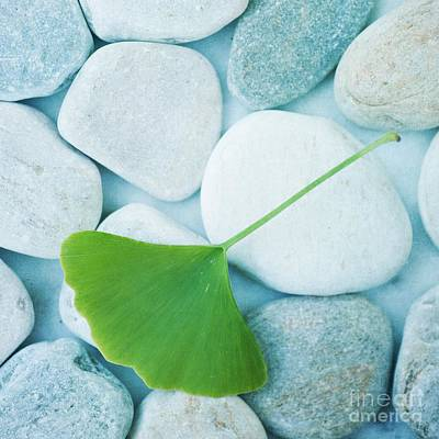 Pebble Photograph - Stones And A Gingko Leaf by Priska Wettstein