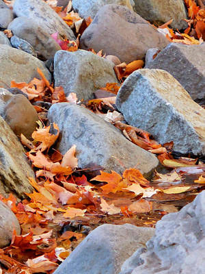 Colorful Photograph - Stones And Autumn Colorful Leaves 9 by Lanjee Chee