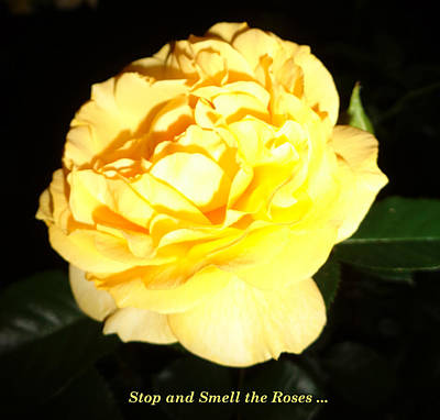Stop And Smell The Roses Print by J Andrel