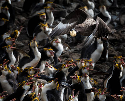 Albatross Photograph - Stop Thief by Doug Gimesy