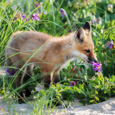Stopping To Smell The Flowers Print by Bill Wakeley