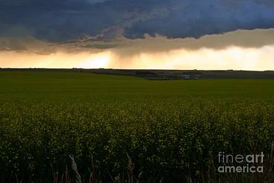Storm Over The Canola Fields Print by Mario Brenes Simon