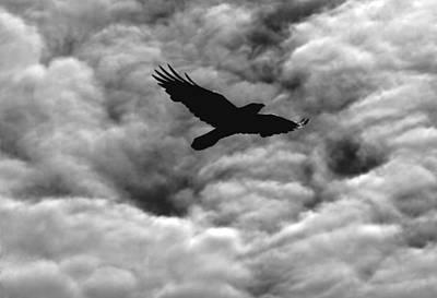 Photograph - Storm Raven -k by Daniel Furon