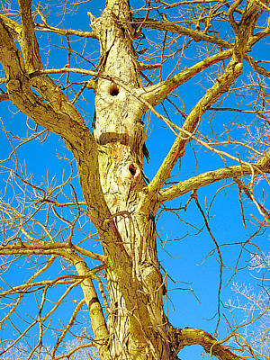 Photograph - Strange Tree by Guy Ricketts