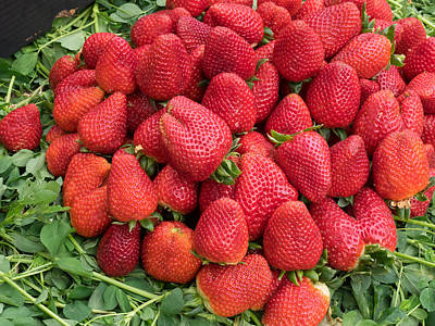 Strawberries For Sale In Souk Print by Panoramic Images
