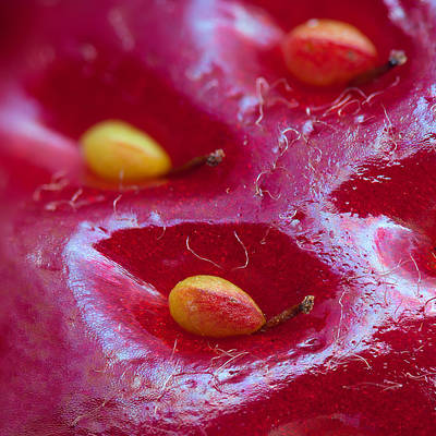 Microscopy Photograph - Strawberry Fields by Alexey Kljatov