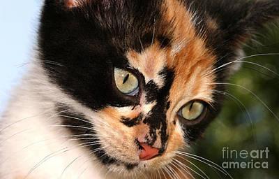 Photograph - Stray Kitten by Steve Augustin