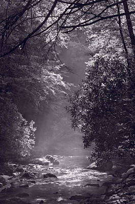 Stream Light B W Print by Steve Gadomski