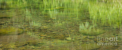 Stream Reflections Print by Charmian Vistaunet