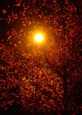 Streetlamp Through Tree Print by Utopia Concepts