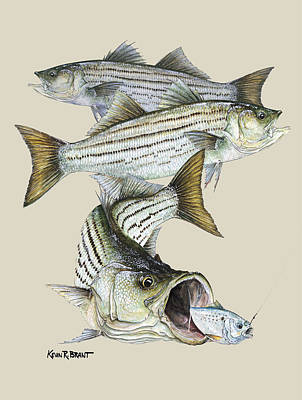 Painting - Striped Bass by Kevin Brant