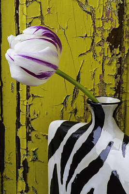 White Tulip Photograph - Striped Vase With Tulip by Garry Gay