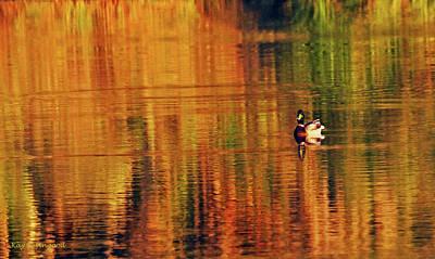 Photograph - Stripes On A Pond by Kay Lovingood