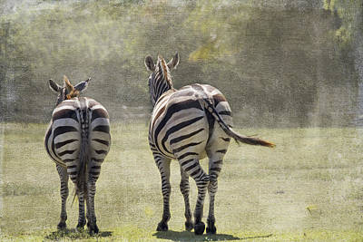Zebra Photograph - Strolling Home by Rebecca Cozart