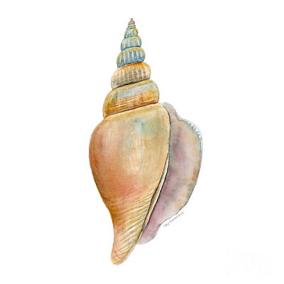 Seashell Painting - Strombus Vittatus Shell by Amy Kirkpatrick