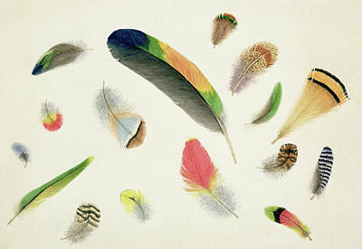 Nature An Bird Painting - Studies Of Feathers by Anne Bowen