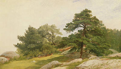 Great Outdoors Painting - Study For Trees On Beverly Coast by John Frederick Kensett