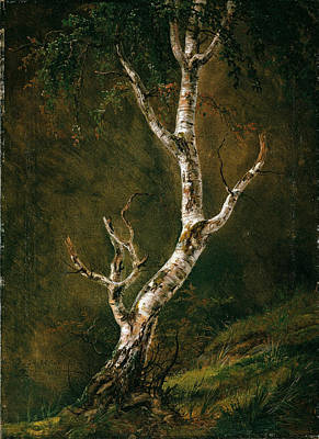 Johan Christian Dahl Painting - Study Of A Birch Tree by Johan Christian Dahl