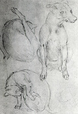 Pen And Ink Drawing Drawing - Study Of A Dog And A Cat by Leonardo da Vinci