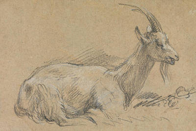 Goat Drawing - Study Of A Goat by Thomas Gainsborough