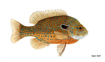 Study Of A Longear Sunfish Print by Thom Glace