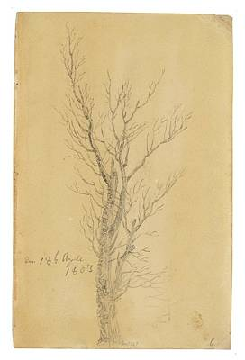 Caspar Painting - Study Of A Tree by MotionAge Designs
