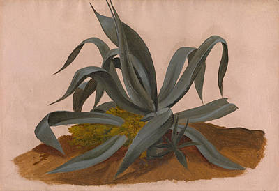 Johan Christian Dahl Painting - Study Of An Agave by Johan Christian Dahl
