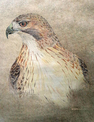 Native American Spirit Portrait Drawing - Study Of The Red-tail Hawk by Leslie M Browning