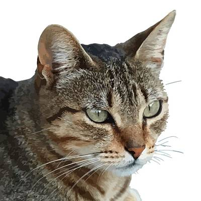 Purebred Digital Art - Stunning Tabby Cat Close Up Portrait Vector Isolated by Tracey Harrington-Simpson