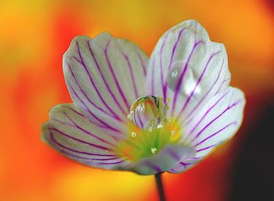 Natures Wonderful Colors Digital Art - Style by Yuri Hope