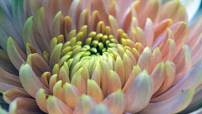 Flowers Photograph - Subtle Blossom by Sumit Mehndiratta