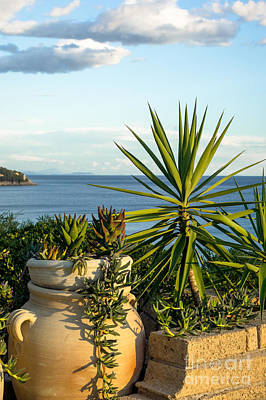 Succulents By The Sea Print by Prints of Italy