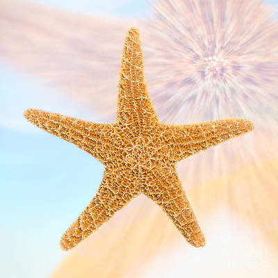 Double Exposure Photograph - Sugar Starfish by Amanda Elwell